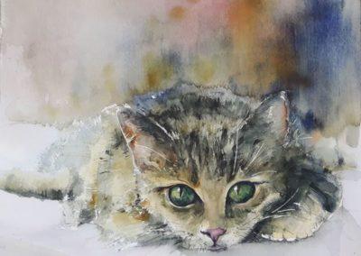 Katzen Aquarell
