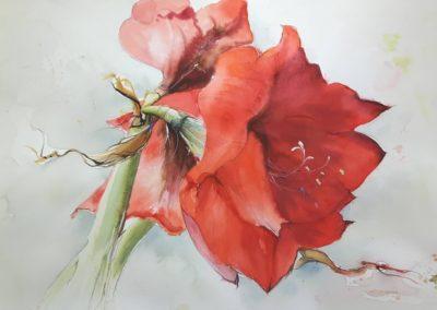 gemalte Amaryllis