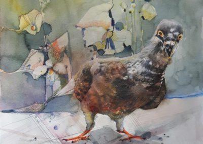 Tauben Challenge Nr02