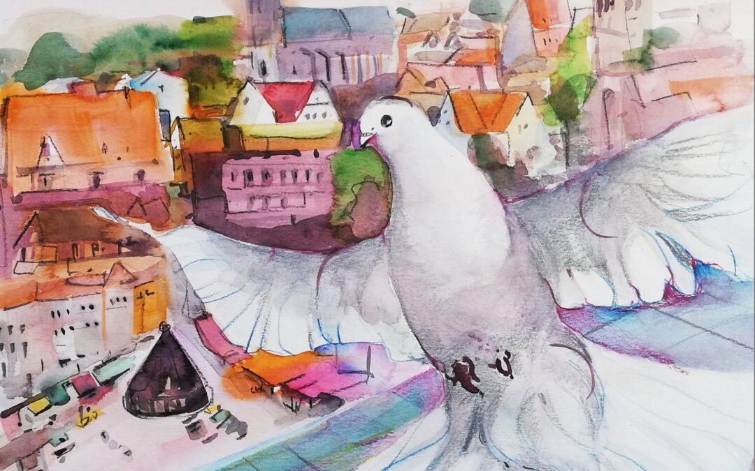 Tauben Challenge Nr. 22